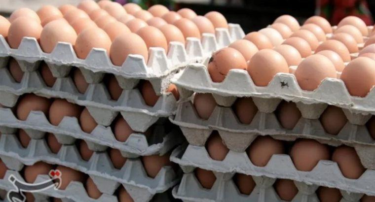 عرضه گسترده تخم مرغ با قیمت شانه ای 42500 تومان از امروز